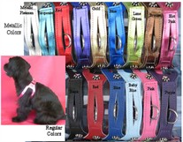 Leather Choke Free Dog Harness