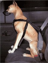 Car Dog Harness X-Small (under 8 lbs)