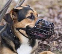 Italian Basket Dog Muzzle Size Chart