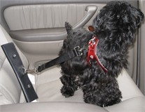 Pet Seat Belt Adapter