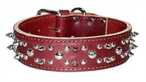 1-3/4 in wide Leather Spiked  And Studded  Dog Collar