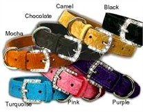 3/4 in Crystal Buckle Dog Collars